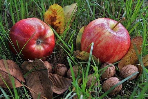 esen plodove pix 1