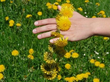 gluharche dandelion pix