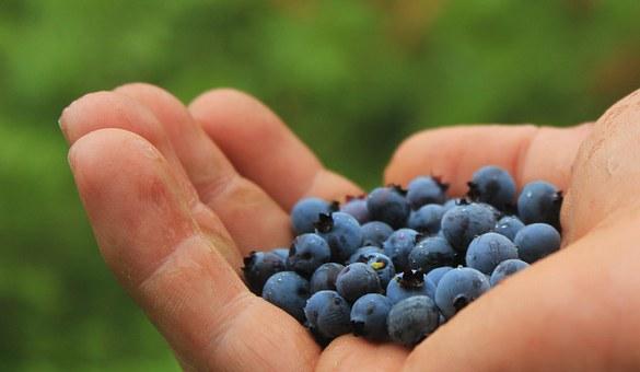blueberries pix 3