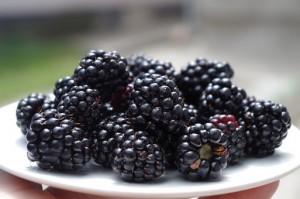 kypini blackberries pix