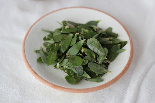 purslane portulaca-oleracea pix 1