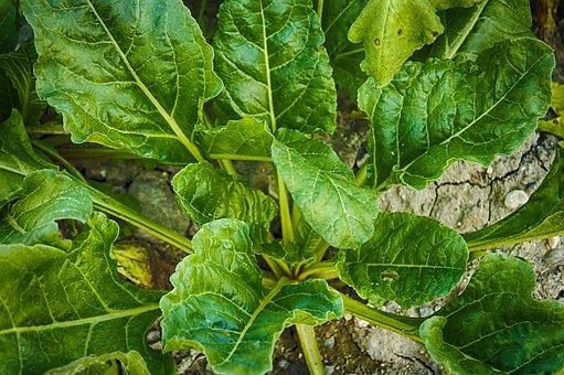 spinach pix