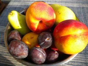 plodove 1