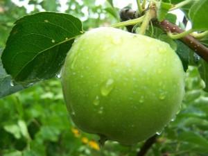 apple niki