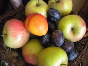 plodove 3