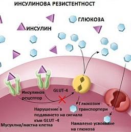 Инсулинова резистентност Симптоми лечение и диета лекарства