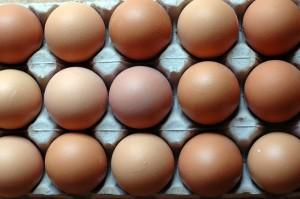 egg-pix