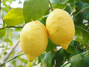 lemon-pix-1