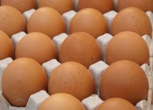 egg pix 1