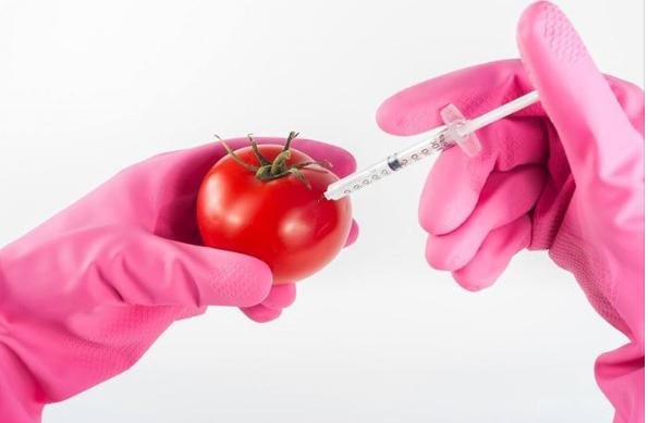 GMO 450 pix