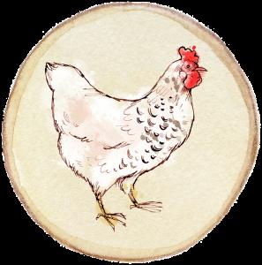 Chicken pix