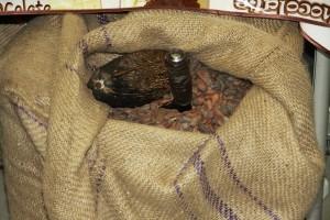 Черен шоколад помага при високо кръвно : Готварски..