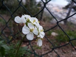 belo ivan bcn 180311 1