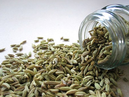 fennel pix 1 seeds