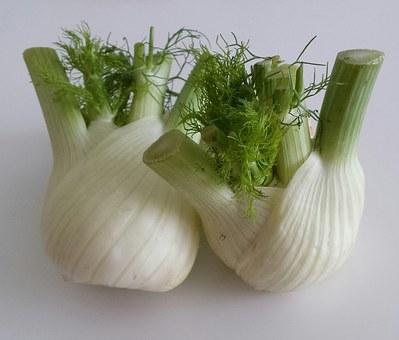 fennel pix 3