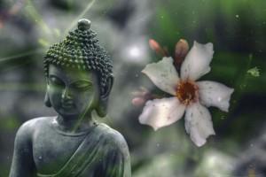 buddha pix