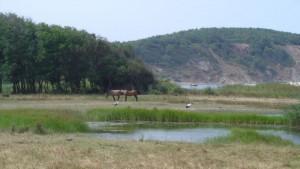"""Устие на река Велека, което е част от Природен парк """"Странджа"""""""