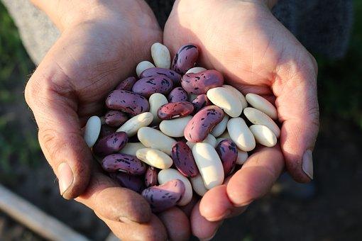 beans pix 1