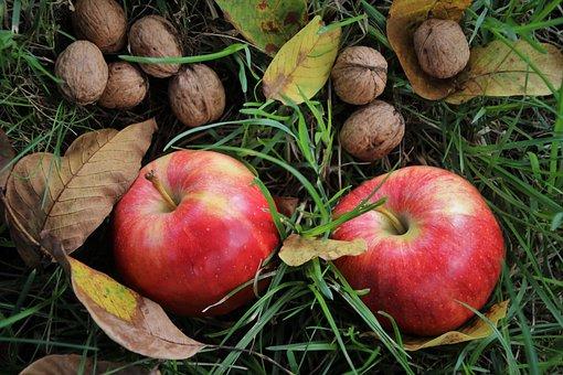 orehi apple pix