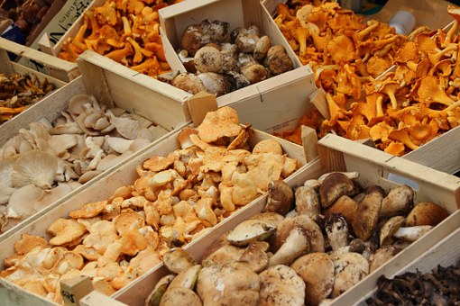 pechurki pachi krak mushrooms pix