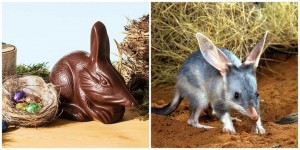 australia chocolate easter