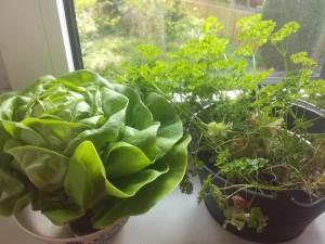 zeleno na prozoreca haga