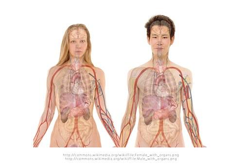 anatomia pix