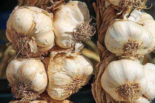 garlic pix